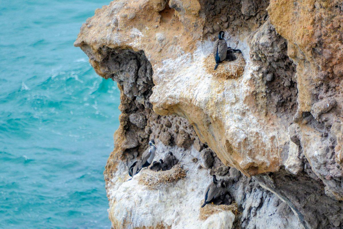Ausflugsboote bringen die Besucher ganz nah an die Küste der Otago Halbinsel heran, wo auch andere Seevögel in den Klippen brüten, Neuseeland - © FRASHO / franks-travelbox