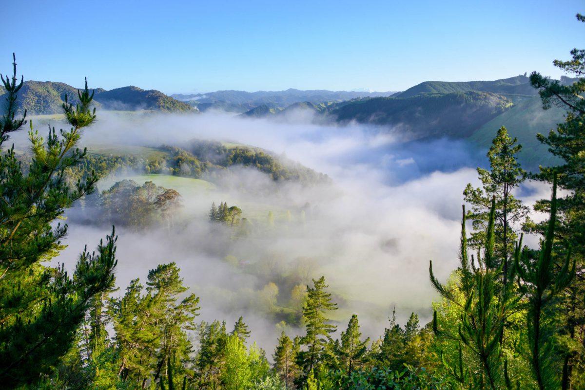Besonders schön ist der Blick von der River Road am Morgen, wenn der Dunst aus dem Whanganui die grünen Hügel noch in wallende Nebelschwaden hüllt, Neuseeland - © FRASHO / franks-travelbox