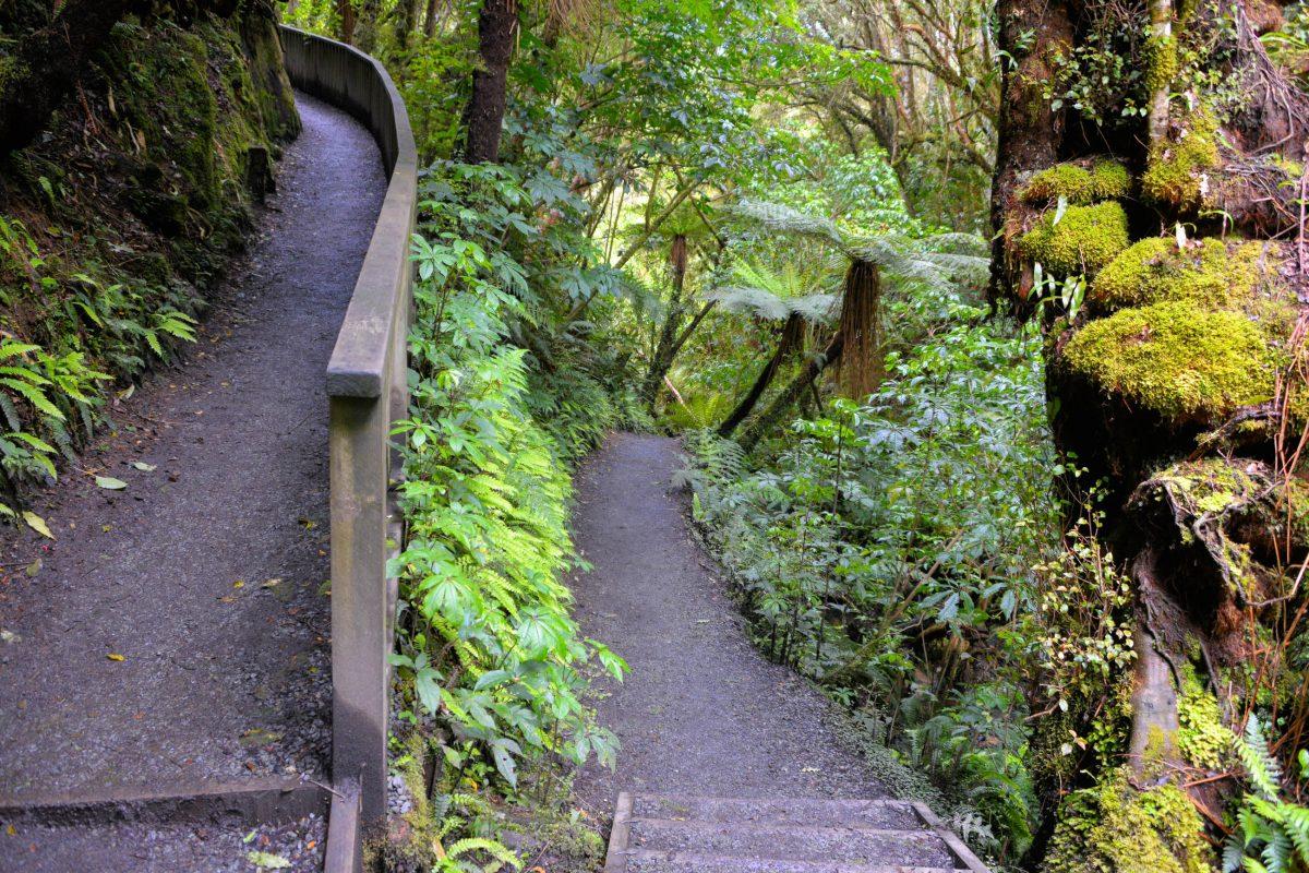 Der gesamte Pfad zum Purakaunui Wasserfall wird von einem Märchenwald aus Steineiben und Silberbuchen gesäumt, Neuseeland - © FRASHO / franks-travelbox