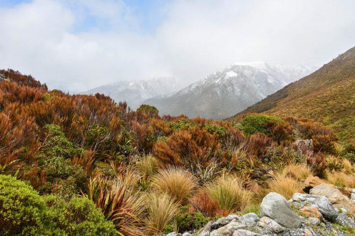 Der Great Alpine Highway führt von der Ost- auf die Westküste direkt über den herrlichen Bergrücken von Neuseelands Südinsel - © FRASHO / franks-travelbox