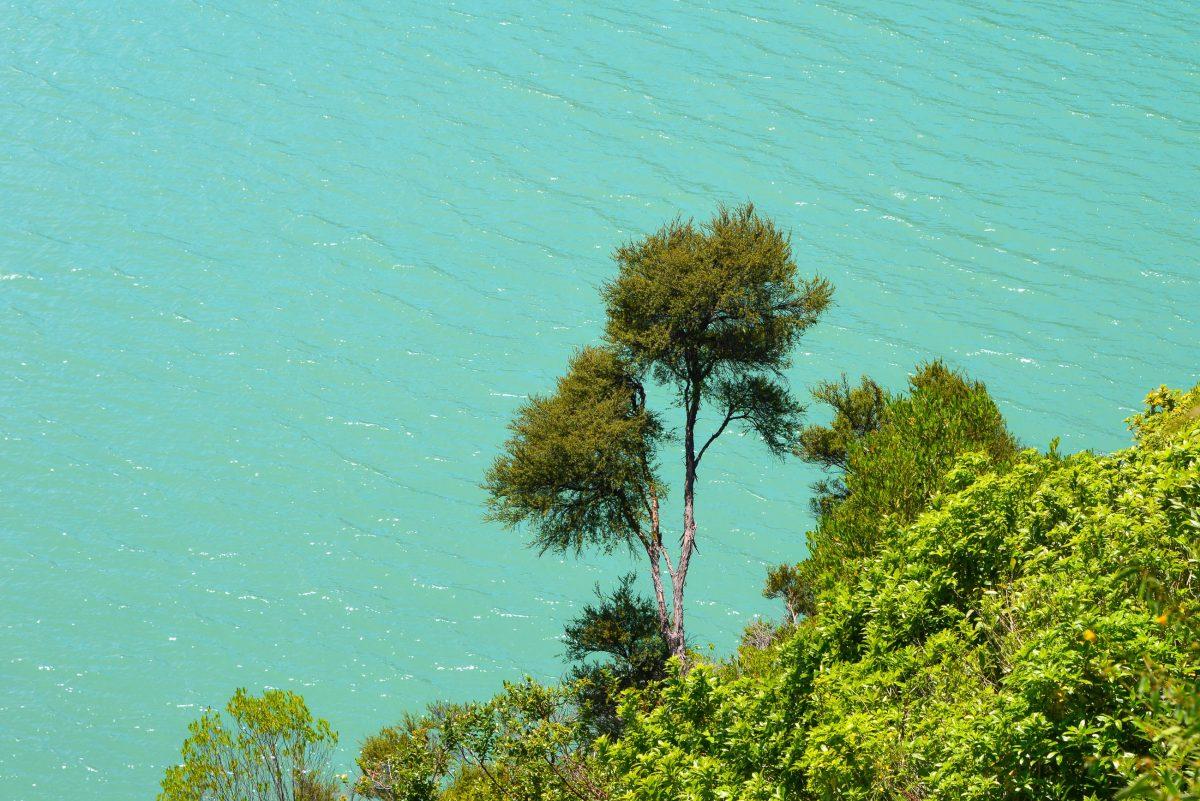Der Nydia Track in den Marlborough Sounds kann von motivierten Wanderern auch in einem Tag gegangen werden, Neuseeland - © FRASHO / franks-travelbox