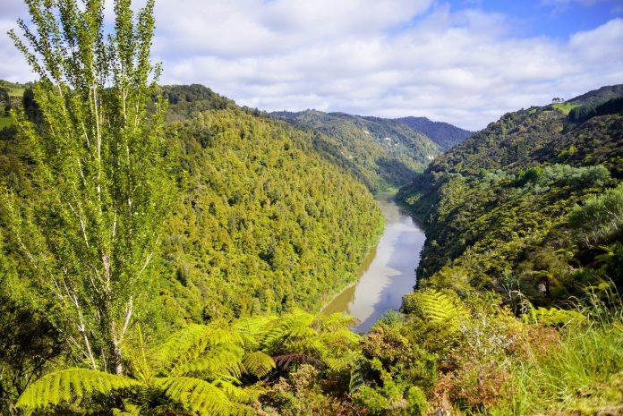 Der Whanganui ist eine beliebte Route für Paddler und Naturliebhaber, um die faszinierenden Wälder des Whanganui-Nationalparks zu erkunden, Neuseeland - © FRASHO / franks-travelbox
