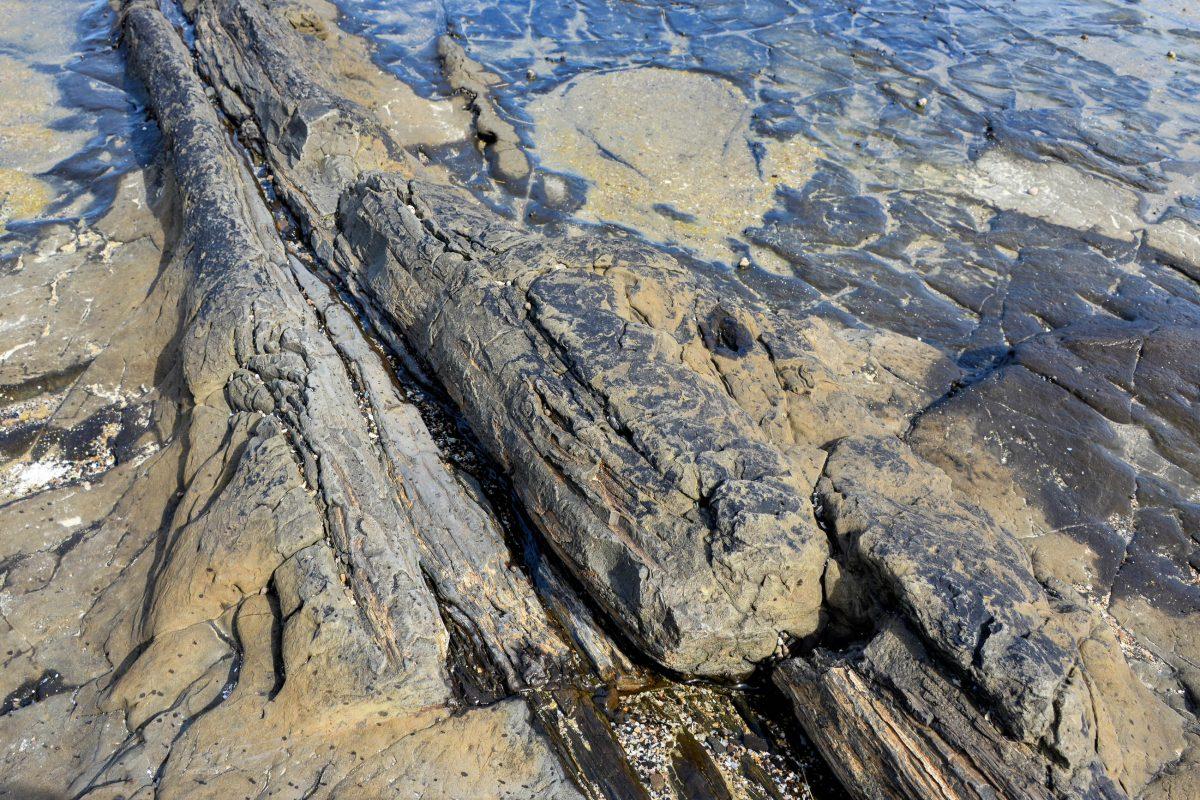 Die faszinierenden Baumstämme in der Curio Bay sehen heute noch aus wie Holz, sind jedoch aus solidem Stein, Neuseeland - © FRASHO / franks-travelbox