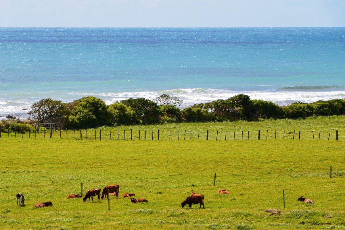 Die Gegend entlang des Surf Highways auf der Nordinsel Neuseelands ist nahezu unberührt und besteht zum Großteil aus Farmland - © FRASHO / franks-travelbox