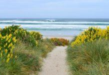 Die Otago Halbinsel gilt als eines von Neuseelands Zentren für Natur- und Ökotourismus und ist für ihre riesige Albatros-Kolonie bekannt - © FRASHO / franks-travelbox