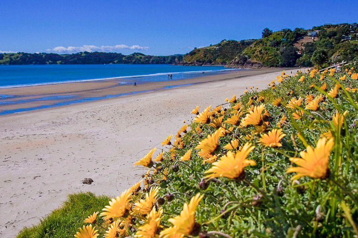 Etwas weniger familienfreundlich, dafür für Surfer ideal präsentiert sich der Onetangi Beach im zentralen Norden von Waiheke, Neuseeland - © Magnus Manske CC BY-SA3.0/Wiki