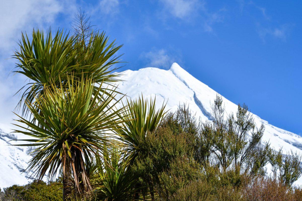Im Jahr 1881 wurde ein exakter Umkreis von sechs Meilen (knapp 10km) um den Mount Taranaki zum Waldschutzgebiet erklärt, Neuseeland - © FRASHO / franks-travelbox