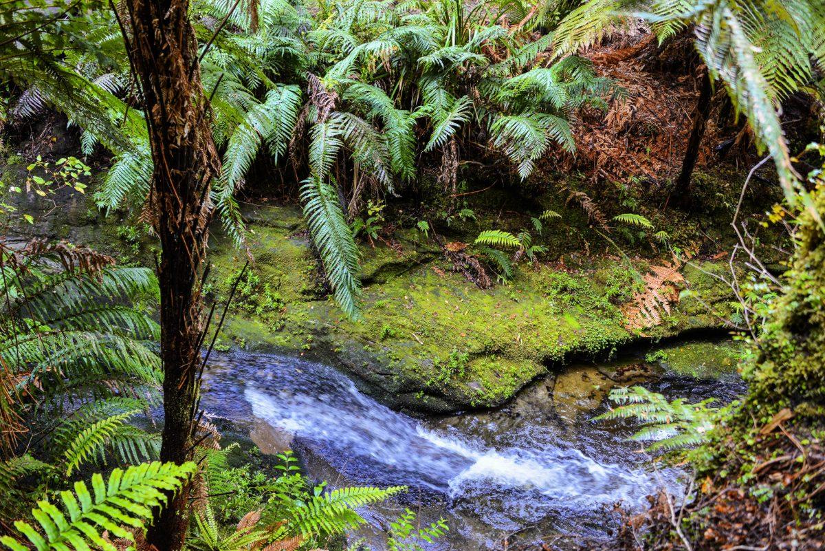 In die sumpfige Landschaft, durch die der Forgotten World Highway zum Teil führt, konnten lange nur Pferdefuhrwerke vordringen, Neuseeland - © FRASHO / franks-travelbox