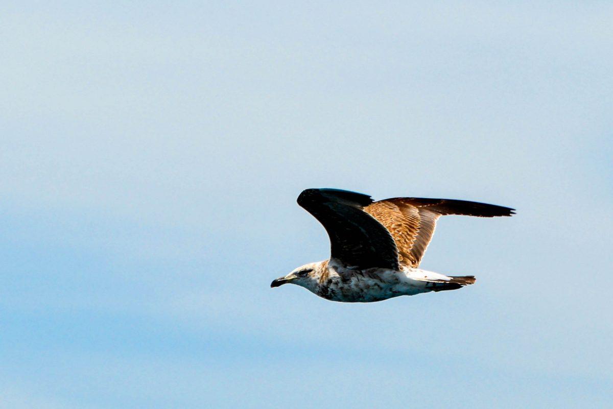 Außer Wale und Delfine gibt es in der intakten Meereswelt rund um Kaikoura auch noch die majestätischen Albatrosse zu beobachten, Neuseeland - © FRASHO / franks-travelbox