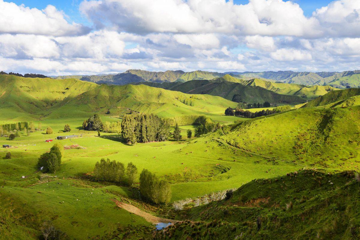 Nach dem Whangamomona Saddle wandelt sich die Landschaft am Forgrotten World Highway wieder in Weideland mit großartiger Fernsicht, Neuseeland - © FRASHO / franks-travelbox
