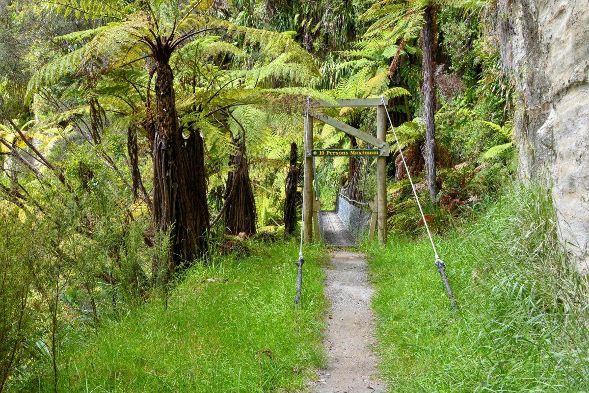 Nach einer Bootsfahrt auf dem Whanganui ist die Bridge to Nowhere über einen Fußmarsch zu erreichen, der durch eine fantastische Pflanzenwelt führt, Neuseeland - © FRASHO / franks-travelbox