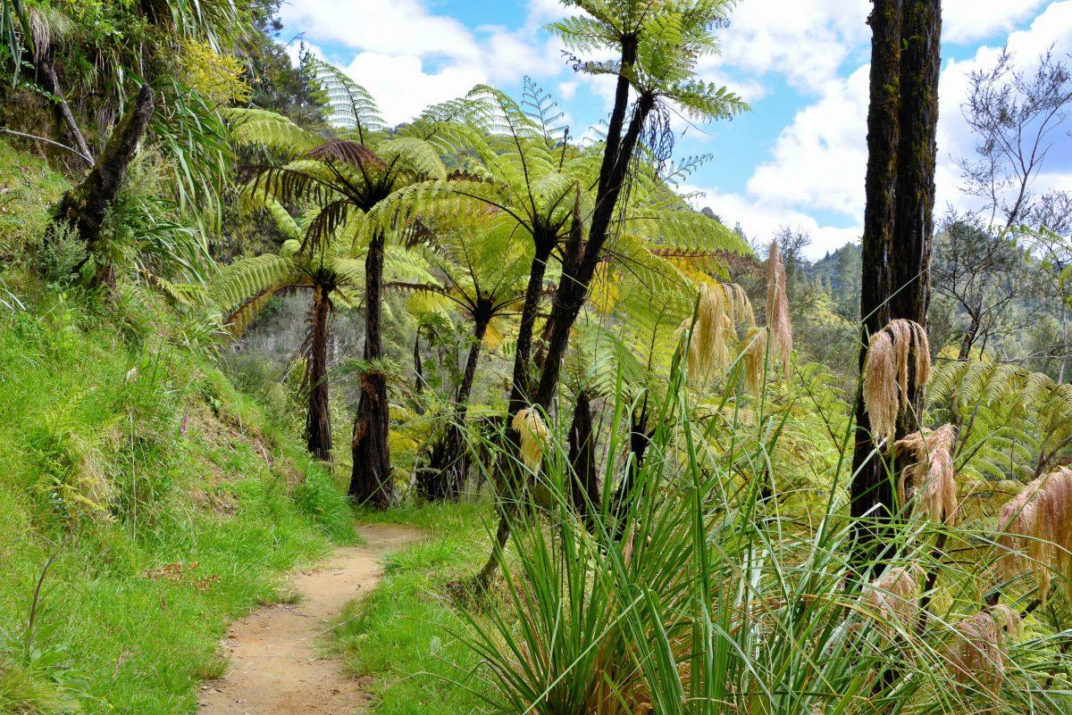 Nachdem die Menschen wieder abgesiedelt waren entstand auf dem Gebiet des heutigen Whanganui-Nationalparks eine der schönsten Naturlandschaften Neuseelands - © FRASHO / franks-travelbox