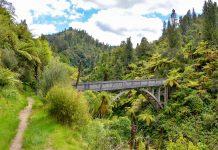 Nachdem die Straße dahinter nicht finanziert wurde, führt die Bridge to Nowhere im Whanganui-Nationalpark bis heute aus dem Dschungel in den Dschungel, Neuseeland - © FRASHO / franks-travelbox