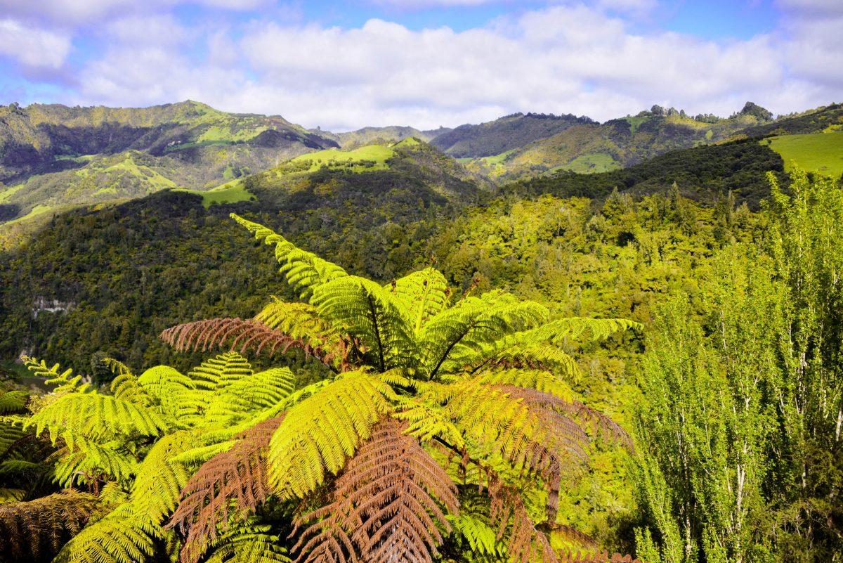 Nirgendwo sonst auf der Nordinsel Neuseelands findet man ein geschlossenes Waldgebiet dieser Größe, wie im Whanganui-Nationalpark - © FRASHO / franks-travelbox