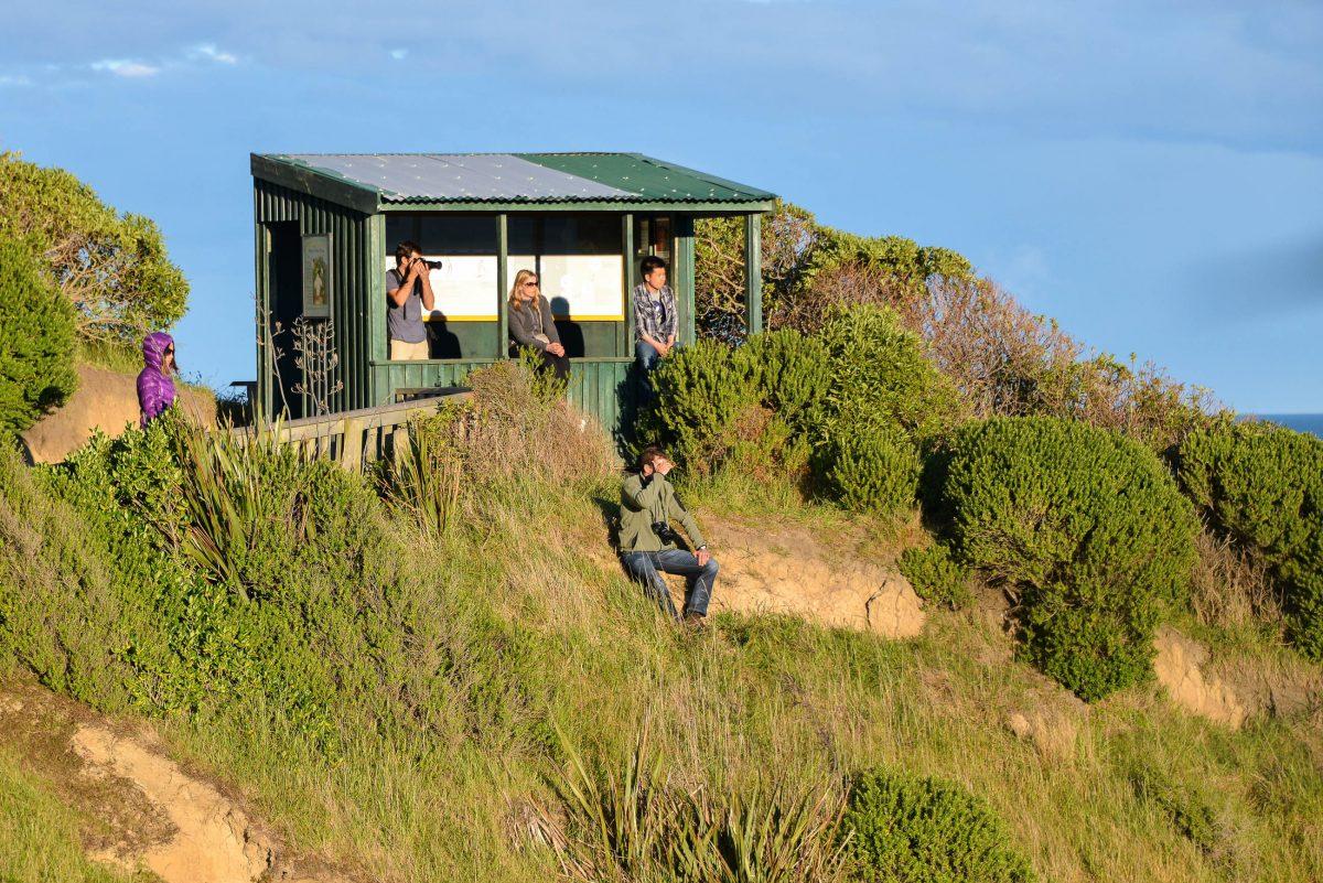 Eine überdachte Hütte hoch über der Bucht von Oamaru fungiert als kostenloser Beobachtungsposten für die Gelbaugenpinguine, Neuseeland - © FRASHO / franks-travelbox