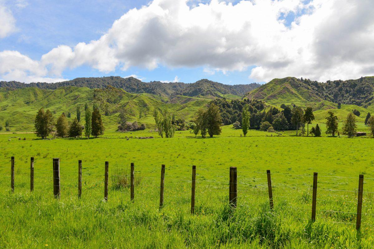 Soweit das Auge reicht zeigen sich am Forgotten World Highway lediglich saftig grüne Wiesen mit lichtem Baumbestand, auf denen friedlich Schafe weiden, Neuseeland - © FRASHO / franks-travelbox