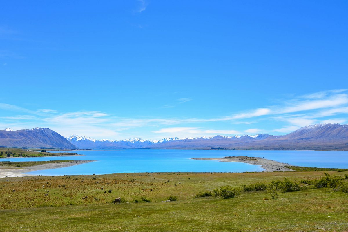 Moschee Neuseeland Video Pinterest: BILDER: Lake Tekapo, Neuseeland