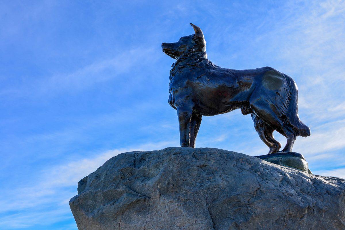 Rund 100m nördlich der Church of the Good Shepherd zollten Schafhirten mit einem Collie-Denkmal ihren Hirtenhunden den verdienten Respekt, Neuseeland - © FRASHO / franks-travelbox
