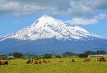 Von nahezu der gesamten Strecke am Surf Highway fällt der Blick direkt auf den eindrucksvollen Mount Egmont, oder Mount Taranaki, Neuseeland - © FRASHO / franks-travelbox