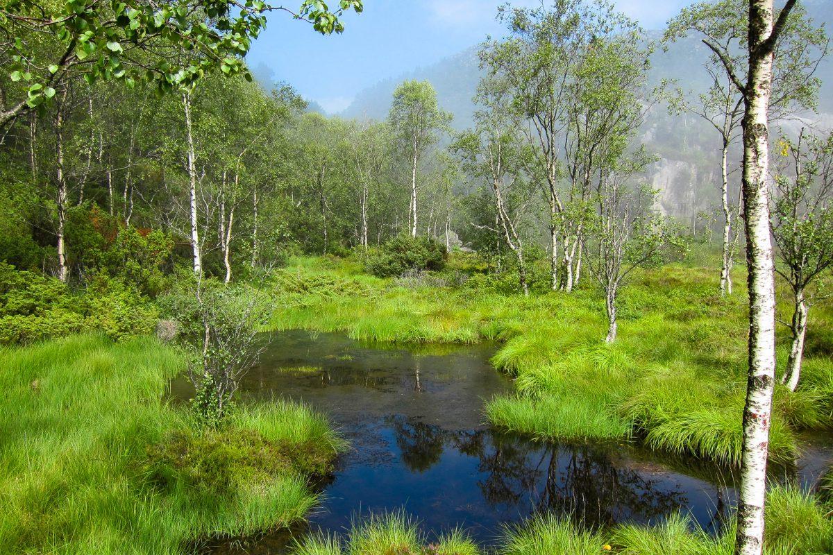 Der Weg auf den Preikestolen führt nach kurzem Anstieg über Holzstege durch sumpfigen Wald und eine urige Moorlandschaft, Norwegen - © FRASHO / franks-travelbox
