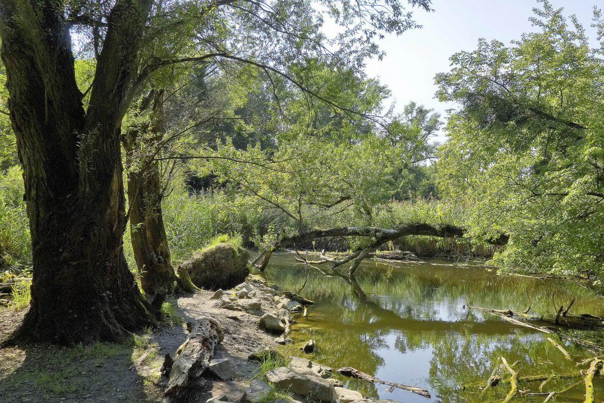 Am Mauthnerwasser ist die idyllisch Au-Landschaft im Wiener Prater noch völlig naturbelassen, Österreich - © Gugerell CC0 1.0/Wiki