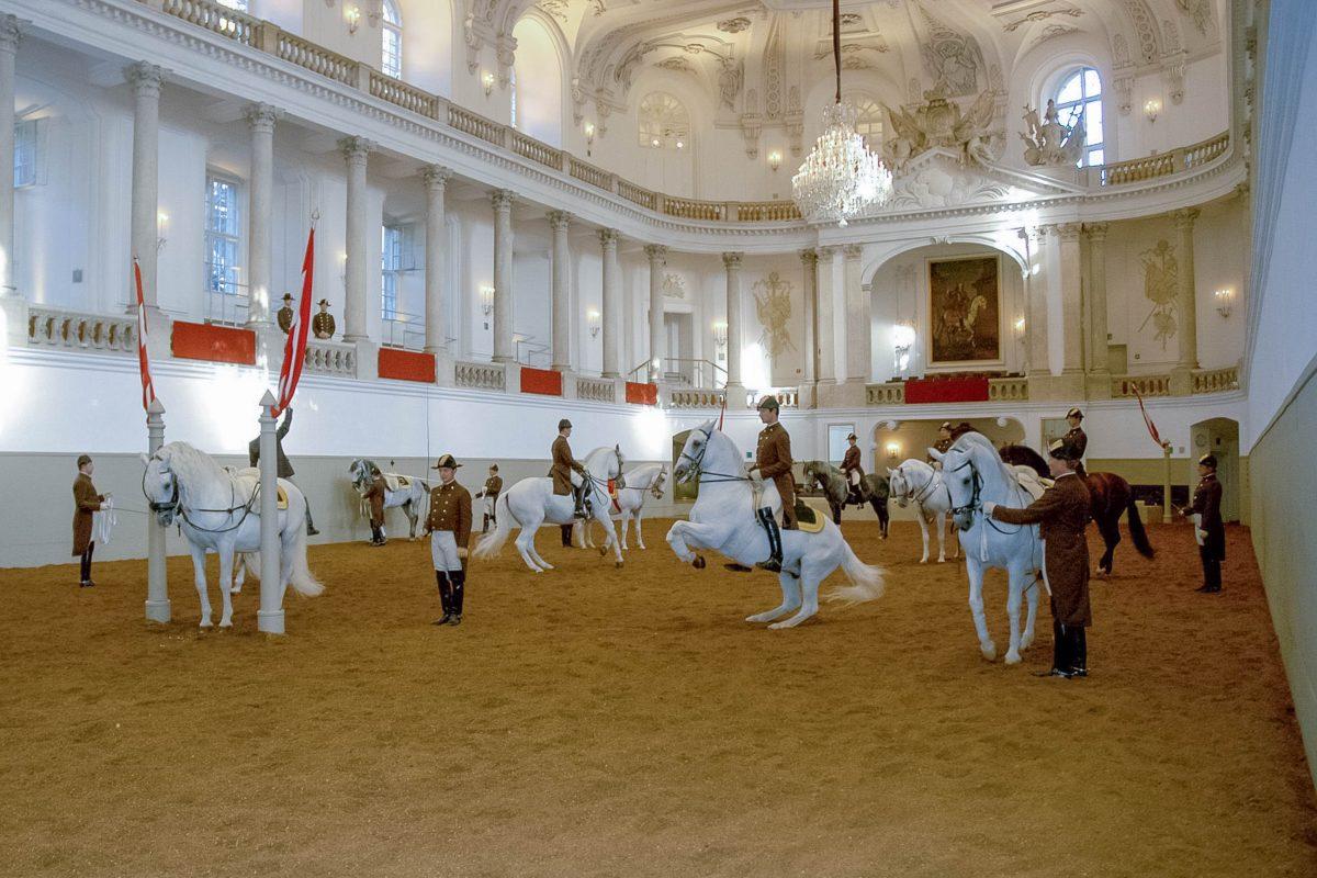 Bei der so genannten Morgenarbeit erhält der Besucher einen umfassenden Einblick in die Trainingsarbeit der Spanischen Hofreitschule in Wien, Österreich - © Herbert Graf/Span.Hofreitsch.