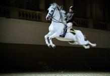 Capriole unter dem Reiter, Spanische Hofreitschule, Wien, Österreich - © René vanBakel/Span.Hofreitsch.