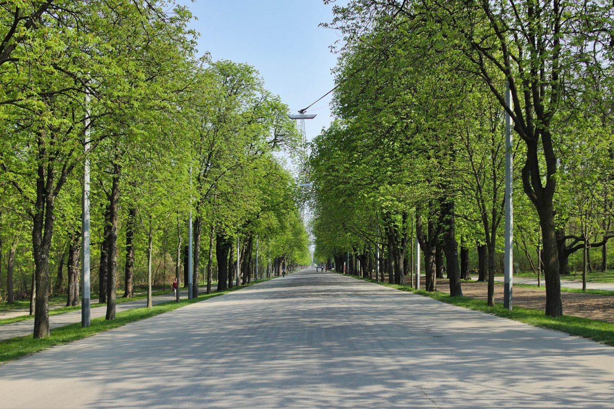 Die 4km lange Prater Hauptallee zwischen Praterstern und Lusthaus ist das Zentrum des Grünen Praters in Wien, Österreich - © darkweasel94 CC0 1.0/Wiki
