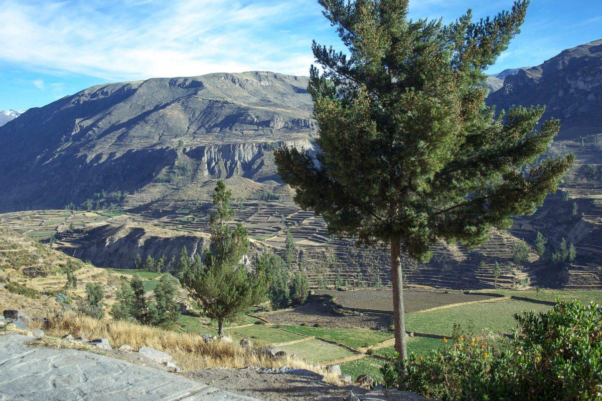 Die Terrassen an den steilen Wänden des Kolka-Tals im Süden von Peru wurden für landwirtschaftliche Zwecke angelegt - © flog / franks-travelbox