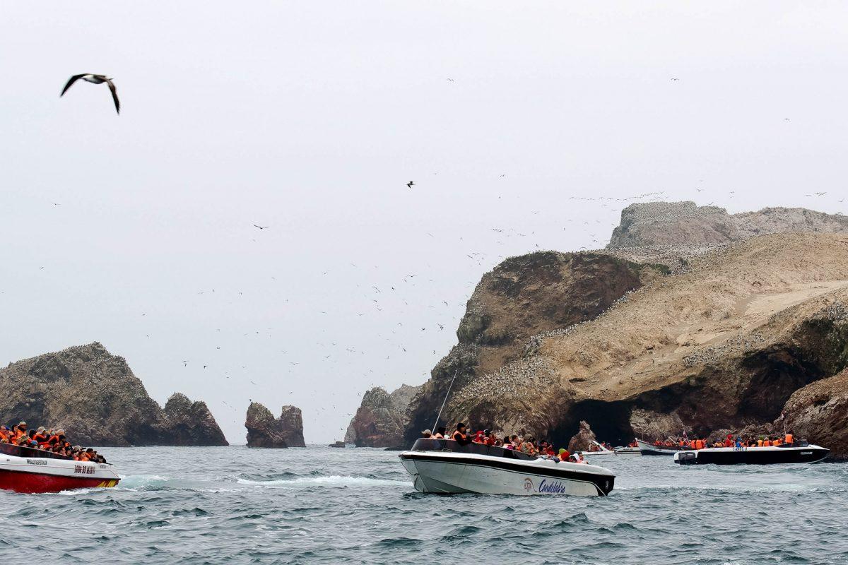 Die tierischen Bewohner der Islas Ballestas lassen sich von den Ausflugsbooten kaum beirren, Peru - © flog / franks-travelbox