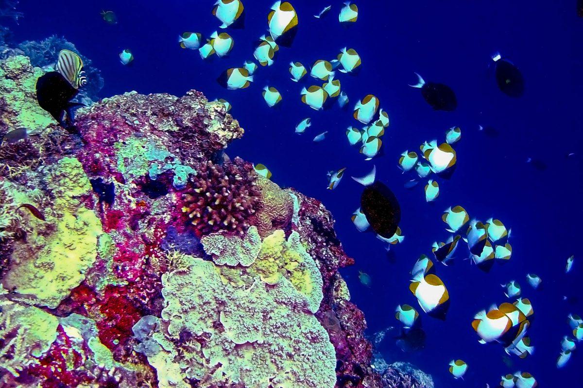 Das Tubbataha-Korallenriff gilt als eines der 10 spektakulärsten Tauchparadiese der Welt, Philippinen - © Marcus Efler / Shutterstock