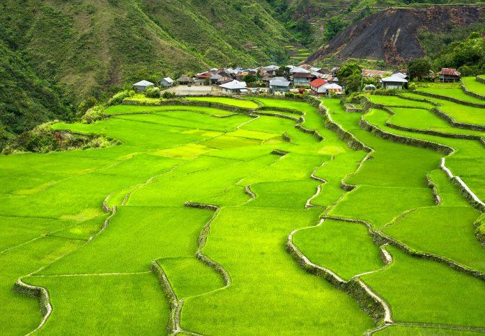 Reisterrassen in den Kordilleren, Philippinen - © jo / Fotolia
