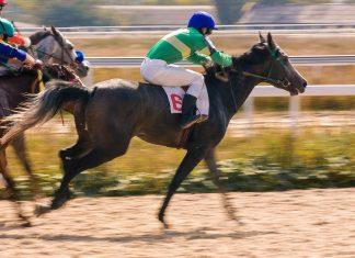Der Qatar Racing & Equestrian Club im Süden Dohas ist die erste Destination in Katar, um die Besten und Edelsten aller Araberpferde in Aktion zu sehen - © Mikhail Pogosov / Shutterstock