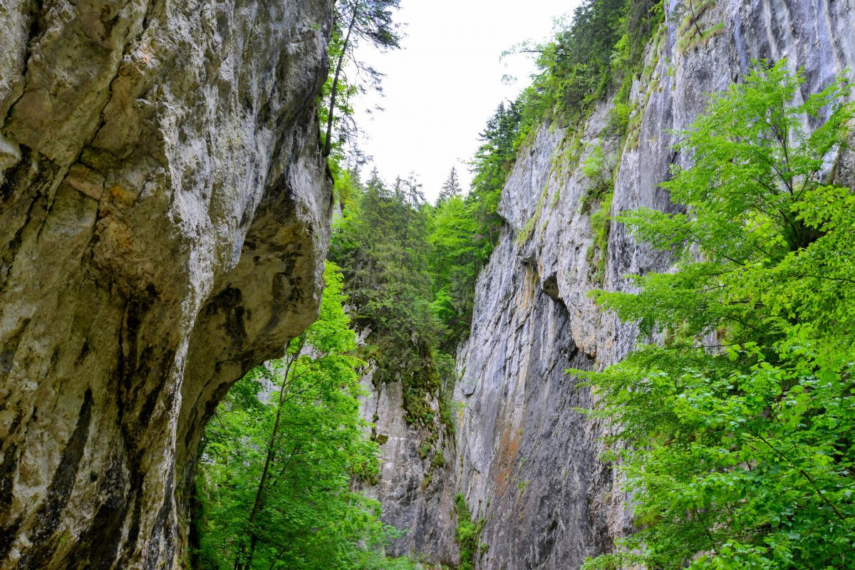 Die Wände der spektakulären Klamm Prăpastia Zărneștiului im Nationalpark Piatra Craiului ragen bis zu 200 Meter senkrecht in den Himmel, Rumänien - © FRASHO / franks-travelbox