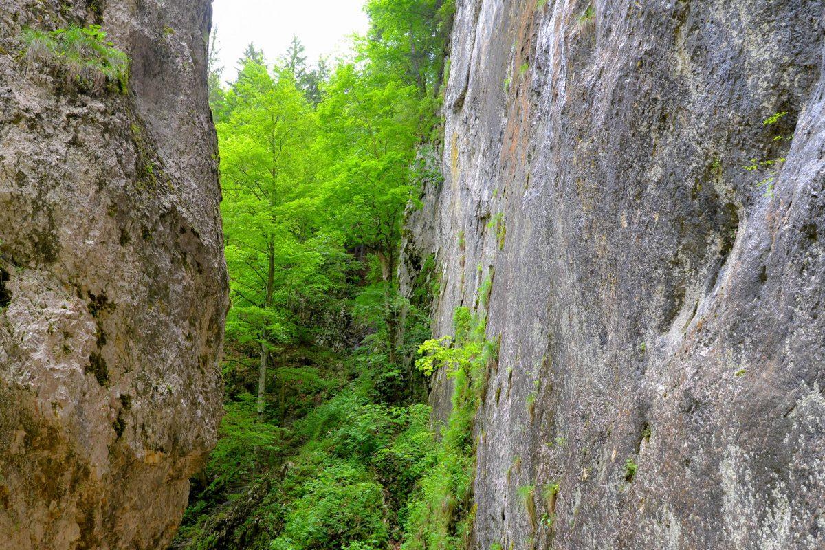 In den dichten Wäldern des Nationalparks Piatra Craiului im zentralen Rumänien leben stark gefährdete Tierarten, wie Braunbären, Wölfe oder Luchse - © FRASHO / franks-travelbox