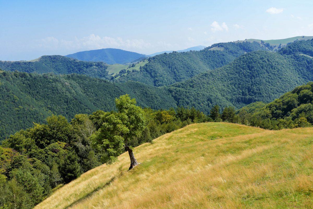 Von dichten Nadelwäldern umgeben sind in der abgelegenen Gegend um Păltiniș in Rumänien vor allem Ruhe und Entspannung zu finden - © FRASHO / franks-travelbox