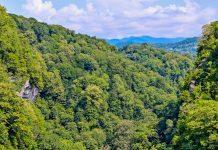 Der Eibenwald am Berg Akhun in der Nähe der russischen Stadt Sotschi am Schwarzen Meer hat sich in den letzten 300 Millionen Jahren kaum verändert, Russland  - © Igor Simanovskiy / Shutterstock