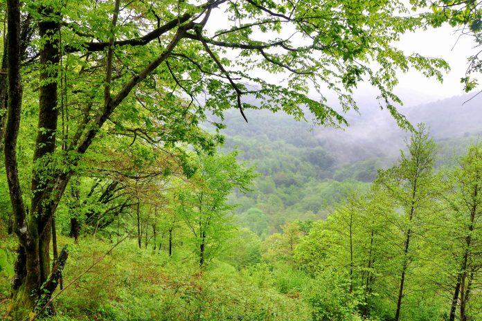Die kaukasischen Wälder im Sotschi Nationalpark im Südwesten Russlands garantieren Idylle und Erholung pur - © Martynova Anna / Shutterstock