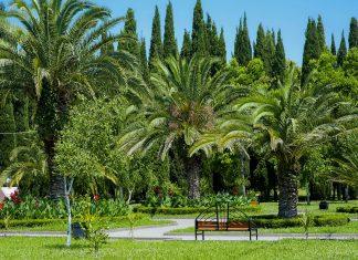 """Der botanische Garten von Sotschi enthält eine einzigartige Sammlung subtropischer Flora und Fauna und wird auch als """"nördlichste Suptropen der Welt"""" bezeichnet, Russland - © katalinks / Shutterstock"""