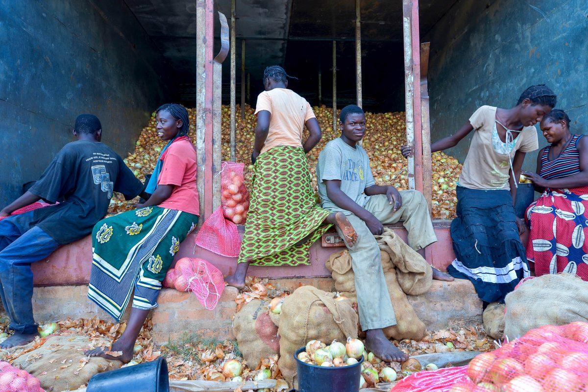 Bauern beim selektieren von Zwiebeln für den Verkauf auf den Märkten von Lusaka, Sambia - © africa924 / Shutterstock