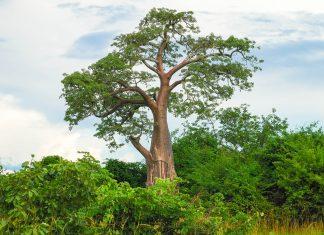 Im Kafue Nationalpark, Sambia - © Maksym Kalyta / Shutterstock