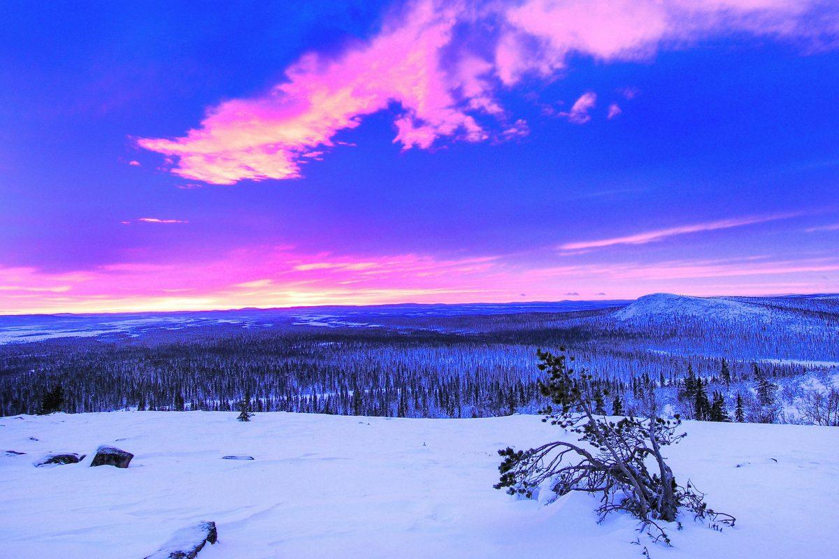 Sonnenaufgang über der winterlichen Landschaft im Muddus-Nationalpark in Laponia, Schweden - © BildagenturZoonarGmbH/Shutterstock