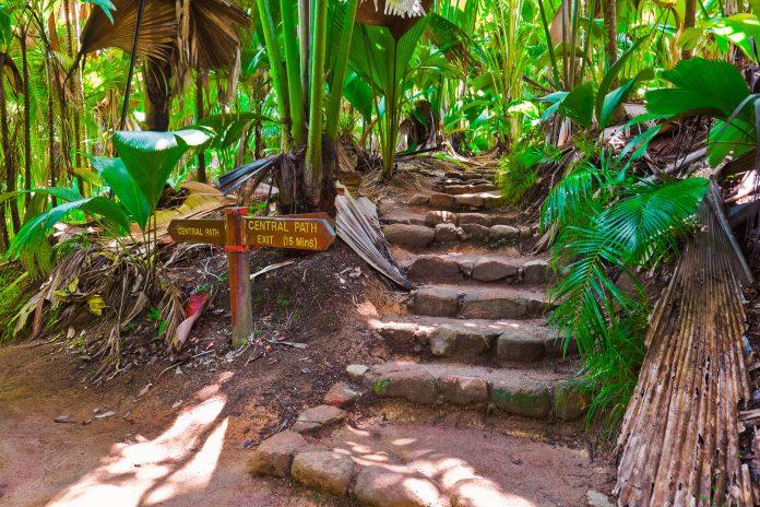 Im Vallée de Mai auf Praslin führen Wanderwege den Besucher durch die faszinierende Natur der Seychellen, vorbei an murmelnden Bachläufen und plätschernden Wasserfällen - © Tatiana Popova / Shutterstock