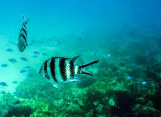 Rund um die geschützte Insel Moyenne auf den Seychellen wartet ein atemberaubendes Taucherparadies - © Dmitry Laudin / Shutterstock