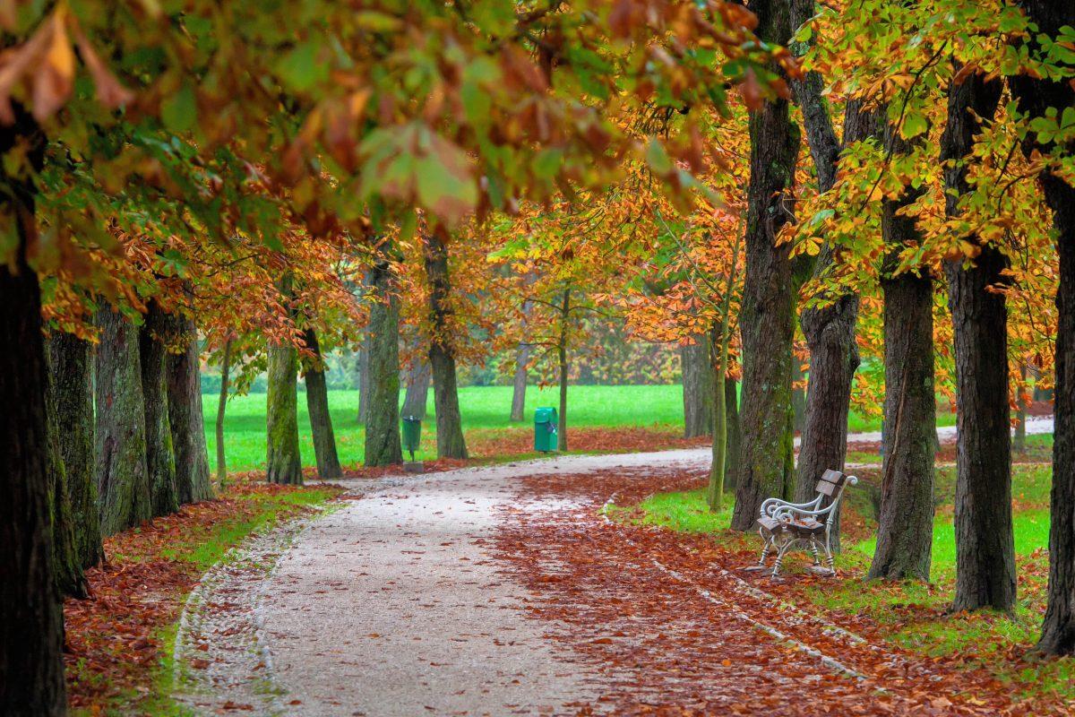 Der Tivoli Park im Nordwesten von Ljubljana lädt das ganze Jahr über zum Joggen, Radfahren, Spaziergehen und Entspannen an der frischen Luft ein, Slowenien - © Matic Stojs / Shutterstock