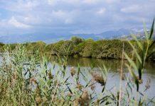 """Das Naturschutzgebiet """"Parc natural de s'Albufera"""" liegt im Nordosten von Mallorca und stellt das wichtigste Feuchtgebiet der Balearen dar, Spanien - © James Camel / franks-travelbox"""