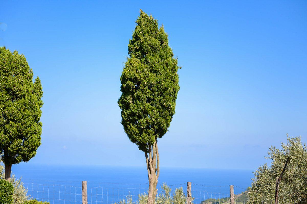 Traumhafter Ausblick vom Monestir de Miramar auf Mallorca über das Meer, Spanien - © James Camel / franks-travelbox