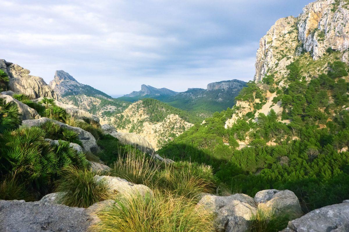 Vom Mirador d'es Colomer aus breitet sich das Cap de Formentor in einem imposanten, sattgrünen Felsenteppich bis zum Meer aus, Mallorca, Spanien - © Lila Pharao / franks-travelbox