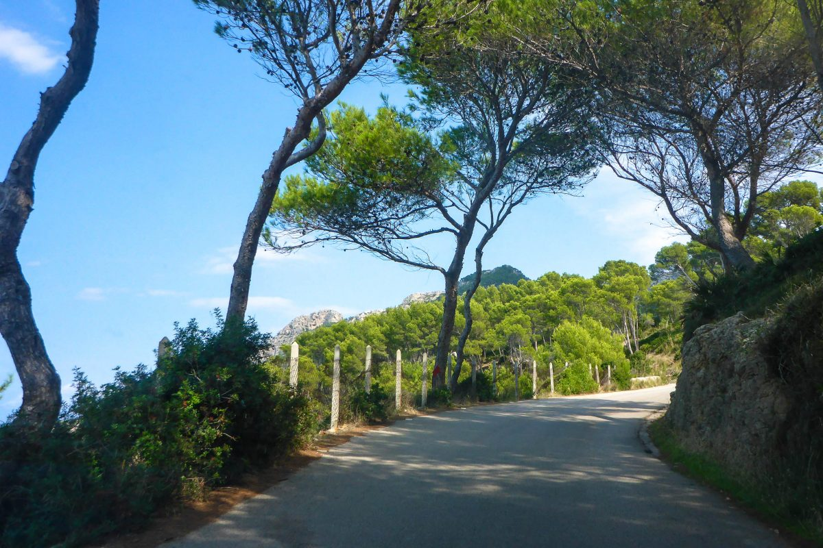 Von Alcúdia zur Ermita de Victòria im Nordosten Mallorcas, Spanien, führt eine landschaftlich äußerst attraktive, von Steineichen und Kiefern gesäumte Straße - © Lila Pharao / franks-travelbox