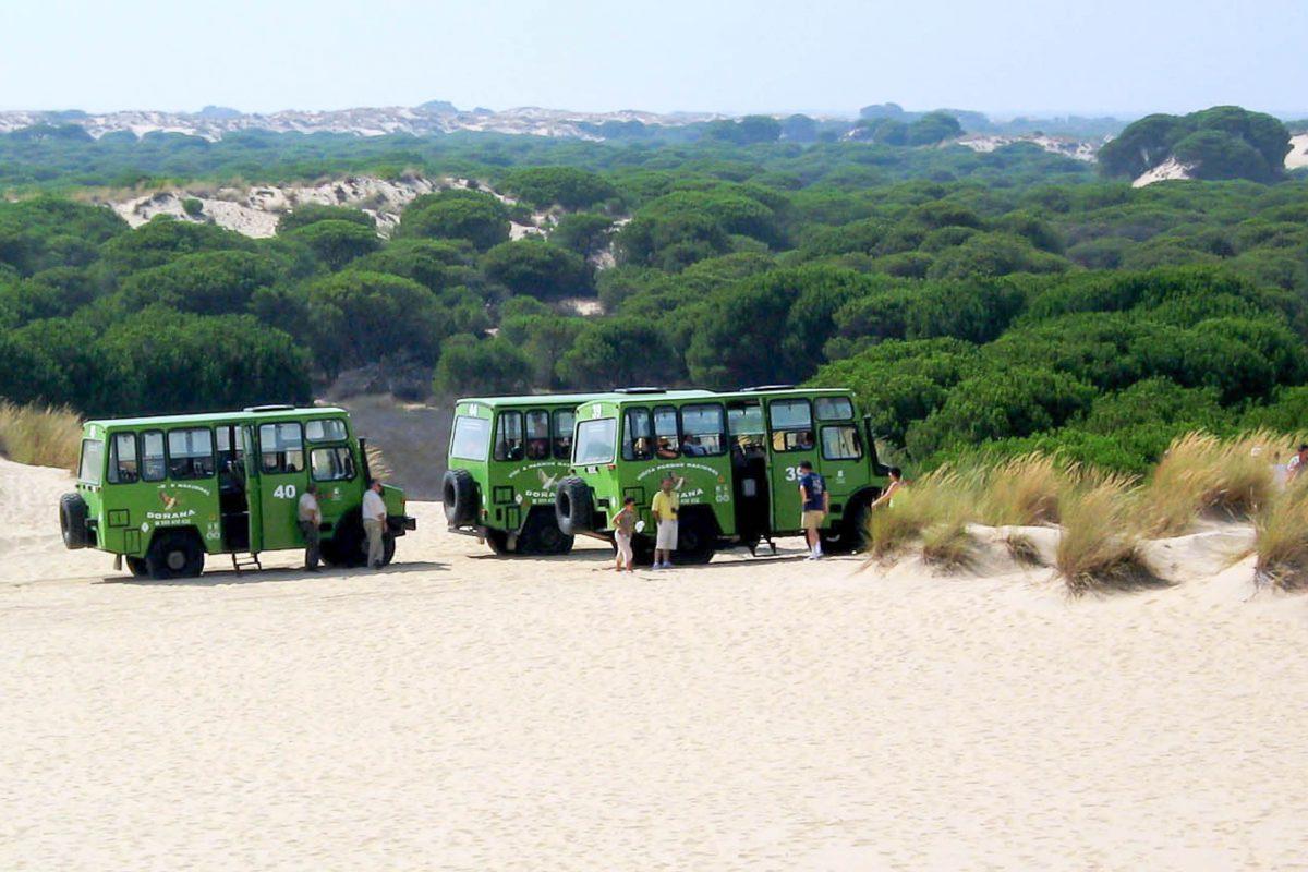 Zweimal pro Tag werden Rundfahrten im Nationalpark Doñana angeboten, die vier bis fünf Stunden dauern; diese starten von El Acebuche, Spanien - © FRASHO / franks-travelbox